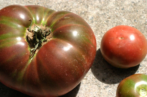 Heirloom tomatoes from my garden