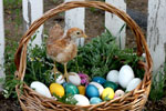 image for Natural Dyed Easter Eggs
