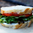 Caramelized Onion and Tomato Sandwich