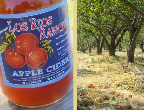 apple-cider-and-orchard