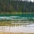 yoho-lake-swimming