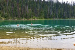 yoho-lake-swimming